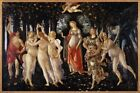 Photo Print Reproduction La Primavera Spring Botticelli Filipepi Other Siz