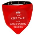 I'm A Bedlington Terrier Bandana | neck tie, red/blue | dog, puppy & owner gift