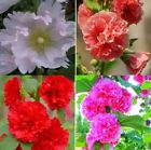 20pcs in the romantic combination of Rhodiola hollyhock flower seeds DIY decorat