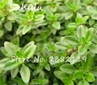 200 sesds/bag organic vegetable Seed Thymus Citriodorus Mosquito Repelling Creep