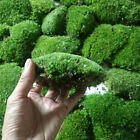 Micro Moss Live Aquarium Plants In Vitro - Aquatic Fish Tank Aquascaping Carpet