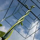 Wall+Plant+Support+Trellis+Mesh+Flexigro+For+Climbing++Climbers+Clematis+Panel