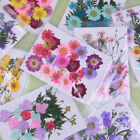 Pressed flower mixed organic natural dried flowers diy art floral decors gifODFS
