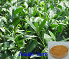 Green Tea Extract, 95% Polyphenols, Pure & High Quality Green Tea Extract powder