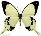 24 x Stunning BLACK & CREAM Butterflies Edible Cup Cake Toppers Rice Paper