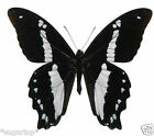 24 x Stunning BLACK & WHITE Butterflies Edible Cup Cake Toppers Rice Paper
