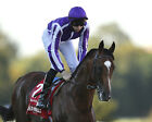ST NICHOLAS ABBEY 02 (RIDDEN BY JOSEPH O'BRIEN) PHOTO PRINT