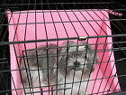 Dog Travel Crate cage Bumper set for protection and comfort