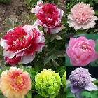 WOO Garden DIY Peony Suffruticosa Poppy Flower 5 Seeds 42 types  [BUY 7 SAVE £1]