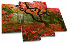 Red Japanese Maple Tree Autumn Canvas Wall Art Picture Multi 4 Panel Split