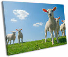 Baby Lambs Sheep Farm Field Spring Framed Canvas Wall Art Picture Print