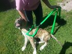 Two (2) Handle Dog Leash Choice of Color Hand Made in usa