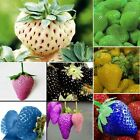 1 Pack 100pcs Strawberry Seeds Nutritious Delicious Blue Black Fruit Seed