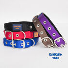 Ginger Ted UK Strong Neoprene Padded Nylon Dog Collar (sizes XS S M L)