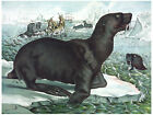 553.Sea Lions In the Antarctic Art Decor POSTER.Graphics to decorate home office