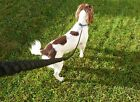 Extra Long Strong 2M 6mm Dog Training Rope Trigger Snap Clip Hook Lead Leash,