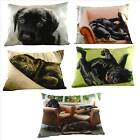 Villager Jim Labrador picture cushions, 43cm x 33cm rectangle filled cushion.