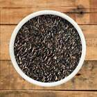 Niger Seed, Best Quality, High Energy Wi...