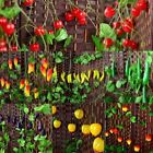 Real Touch Green Foliage Artificial Lvy Fruit Vegetable Leaves Wedding Garlands