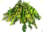 100g Dried/Preserved Buxus (Boxwood) leaves craft floral deco