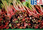 USA SELLER Victoria Red Rhubarb HEIRLOOM NON GMO