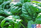 USA SELLER New Zealand Spinach 25-200 seeds HEIRLOOM NON GMO