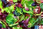 USA SELLER Colorful Spinach Mix 50-1000 seeds HEIRLOOM NON-GMO