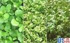 USA SELLER Cress Mix (Water, Wrinkled, Pepper) seeds  200-1600  HEIRLOOM NON GMO