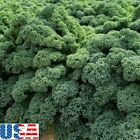 USA SELLER Blue Scotch Kale 50-400 seeds HEIRLOOM NON GMO