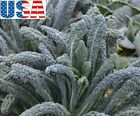 USA SELLER Lacinato Kale 50-400 seeds HEIRLOOM NON GMO