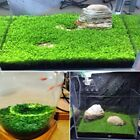 Внешний вид - Plant Seeds Fish Tank Aquarium Aquatic Water Grass Decor Garden Foreground Plant