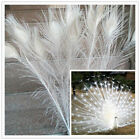10-100 Pcs White Natural Peacock Feathers 28-32inch/70-80cm Carnival Diy Costume