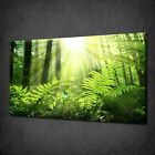 SUNRAYS GREEN FOREST LANDSCAPE WALL ART CANVAS PRINT PICTURE VARIETY OF SIZES