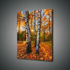 BIRCH TREE FOREST CANVAS PRINT PICTURE WALL ART FREE UK DELIVERY
