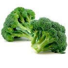 Calabrese Broccoli Seeds by Zellajake Many Sizes Sprouting Microgreen Garden 16C
