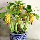New Rare Dwarf Banana Tree Seeds Mini Bonsai Fruit Exotic Home Garden BRCE 01