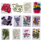 Variety Pressed Flowers Real Natural Organic Dried Flower DIY Floral Decor Craft
