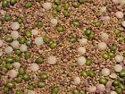 Salad Sprouting Microgreens 5 Seed Mix Alfalfa Broccoli Lentil Mung Radish C25