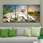 wall26 - 3 Panel Canvas Wall Art - A White Tiger Lying on a Rock