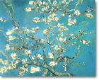 HUGE Van Gogh Almond Branches in Blossom Stretched Canvas Giclee Repro ALL SIZES