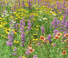 WILDFLOWER MIX 3B BEE BIRD BUTTERFLY Bulk Flower Seeds + Free Seeds