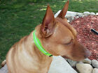 LED Dog Pet Night Safety Collar Flashing Light Up Collar  Nylon