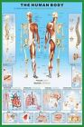 New The Human Body and it's Organs Human Biology Poster