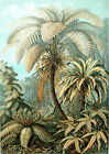 Ernst Haeckel Art Forms in Nature New Repro Print/Poster #3 Giclee Archival Ink