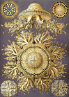 Ernst Haeckel Art Forms in Nature New Repro Print/Poster #16 Giclee Archival Ink
