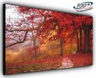 Autumn Leaves Panoramic Canvas Print Modern Art 4 Sizes to Choose Ready to Hang