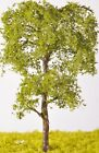 Beech Tree - (Click picture to see prices and options)