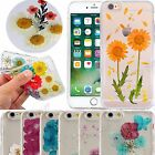 Pressed Real Dried Flower Daisy Case Transparent PC Cover For iPhone 6/6S/7/Plus