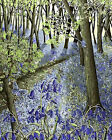 Forest With Blue Flowers Gobelin Needlepoint Canvas  H28