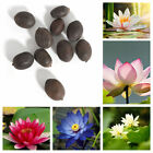 10Pcs Fresh Lotus Water Lily Flower Bowl Pond Bonsai Seeds Perfume Blue Lotus